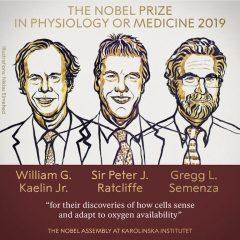 Imagem da notícia: Nobel Laureates in Medicine: how cells adapt to oxygen differences
